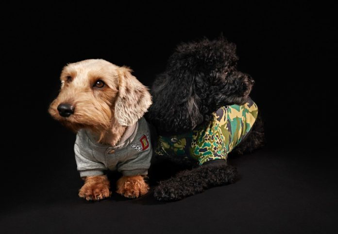 Diesel Petwear 2021 collection |  Doggies Collection